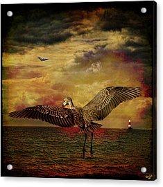 Herons Acrylic Print by Chris Lord