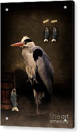Heron's Home Acrylic Print by Angela Doelling AD DESIGN Photo and PhotoArt