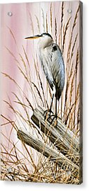 Herons Watch Acrylic Print by James Williamson