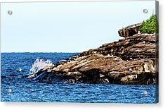 Acrylic Print featuring the photograph Herring Gull Picnic by Onyonet  Photo Studios