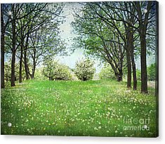 He's In The Orchard Acrylic Print by Kathi Mirto