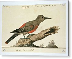 Het Mannetje Op Ware Grootte Acrylic Print by Robert Jacob