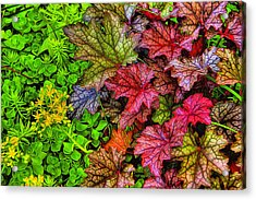Heuchera And Sedum Acrylic Print by Dennis Lundell