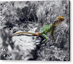 Hey, I'm Posing Here Acrylic Print by Charles Ables