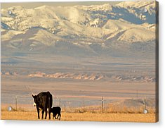 Acrylic Print featuring the photograph Hey Mom..  Wait Up by Al Swasey