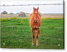 Acrylic Print featuring the photograph Hey You - Ya You by Melinda Ledsome