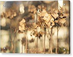 Acrylic Print featuring the photograph Hibernating Beautifully by Lisa Knechtel
