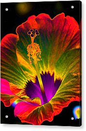 Hibiscus 01 - Summer's End - Photopower 3189 Acrylic Print