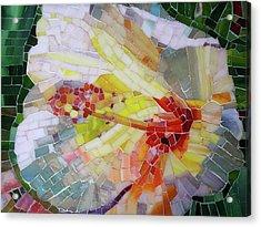Hibiscus #1 Acrylic Print