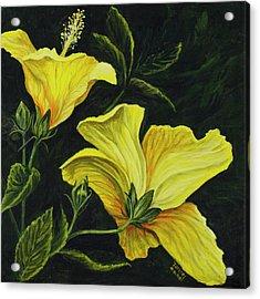 Hibiscus 2 Acrylic Print by Darice Machel McGuire