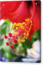 Hibiscus #3 Acrylic Print