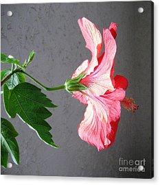 Hibiscus #4 Acrylic Print