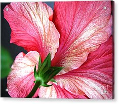 Hibiscus #5 Acrylic Print