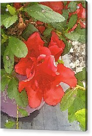 Hibiscus B Acrylic Print