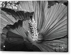 Hibiscus Black And White Acrylic Print