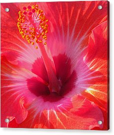 Acrylic Print featuring the photograph Hibiscus - Coral And Pink Square by Kerri Ligatich
