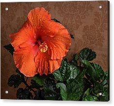 Hibiscus Fine Art Acrylic Print