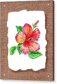 Hibiscus Flower Botanical Acrylic Print