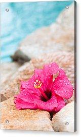 Hibiscus Flower Acrylic Print by Amanda Elwell