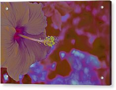 Hibiscus Gllow Acrylic Print by Lucrecia Cuervo