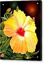 Hibiscus Glory Acrylic Print