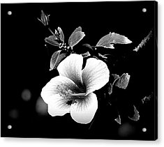 Acrylic Print featuring the photograph Hibiscus In The Dark by Lori Seaman