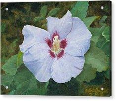 Hibiscus Acrylic Print by Joshua Martin