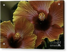 Acrylic Print featuring the photograph Hibiscus by Lori Mellen-Pagliaro