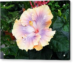 Acrylic Print featuring the photograph Hibiscus by Margie Avellino