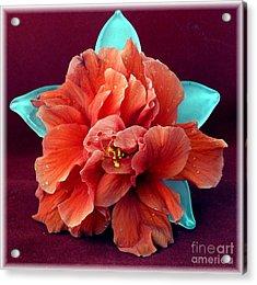 Hibiscus On Glass Acrylic Print by Barbie Corbett-Newmin