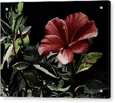 Hibiscus Acrylic Print by Patricia Halstead