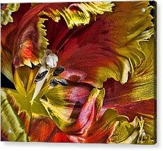 Hibiscus Spice Acrylic Print