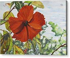 Hibiscus St Thomas Acrylic Print by Carol Flagg