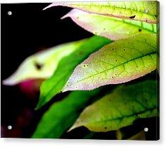 Hickory Leaf Acrylic Print