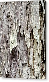 Acrylic Print featuring the photograph Hickory Tree Bark Abstract by Christina Rollo