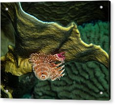 Acrylic Print featuring the photograph Hidden Christmastree Worm by Jean Noren
