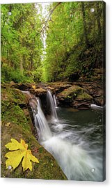 Hidden Falls At Rock Creek Acrylic Print by David Gn