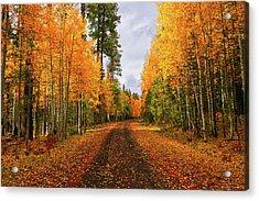 Hidden Paths Acrylic Print