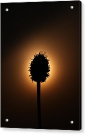 Hidden Sun Acrylic Print by Joe Sampouw