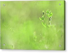 Hidden Treasure. Green World Acrylic Print by Jenny Rainbow