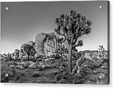 Hidden Valley Rock Acrylic Print by Peter Tellone