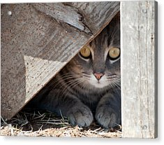 Hide A Kitty Acrylic Print
