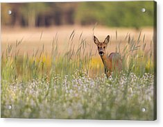 Hide And Seek Acrylic Print by Andy Luberti