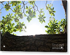 Acrylic Print featuring the photograph Hide And Seek by Cendrine Marrouat