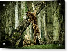 Hide And Seek Acrylic Print