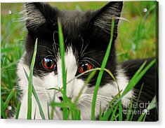 Hide And Seek  Acrylic Print by Naomi Burgess