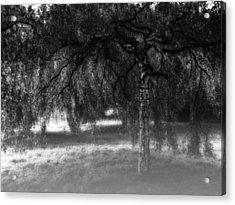 Hide And Seek Acrylic Print by Wim Lanclus