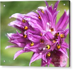 Acrylic Print featuring the photograph Hiding by Erica Hanel