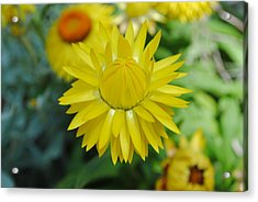 Acrylic Print featuring the photograph Hiding From The Sun by Laura DAddona