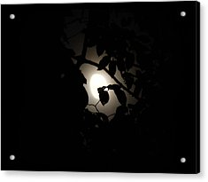 Acrylic Print featuring the photograph Hiding - Leaves Over Moon by Menega Sabidussi